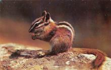 top009535 - Squirrel/Chipmunks/Woodchucks