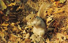 top009553 - Squirrel/Chipmunks/Woodchucks