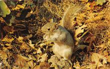 top009555 - Squirrel/Chipmunks/Woodchucks