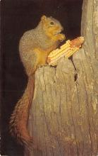 top009559 - Squirrel/Chipmunks/Woodchucks