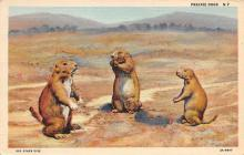 top009563 - Squirrel/Chipmunks/Woodchucks