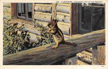 top009565 - Squirrel/Chipmunks/Woodchucks