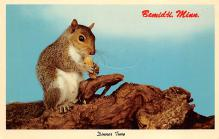 top009569 - Squirrel/Chipmunks/Woodchucks