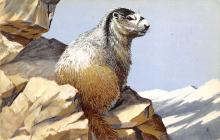 top009583 - Squirrel/Chipmunks/Woodchucks
