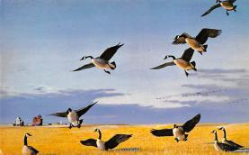 top009627 - Ducks/Geese