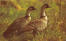 top009639 - Ducks/Geese