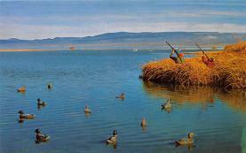 top009647 - Ducks/Geese
