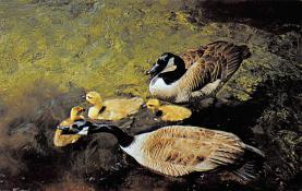 top009677 - Ducks/Geese