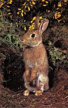 top009707 - Rabbits