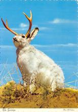 top009725 - Rabbits