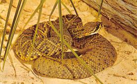 top009729 - Snakes/Reptiles