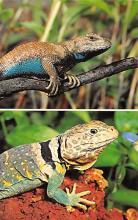 top009793 - Reptiles/Alligator