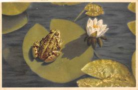 top009805 - Frogs