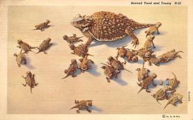 top009811 - Frogs