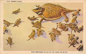 top009821 - Frogs