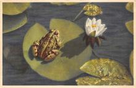 top009823 - Frogs