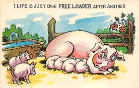 top009895 - Pigs