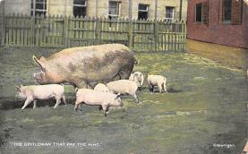 top009911 - Pigs