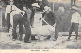top009915 - Pigs