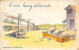 top009925 - Pigs