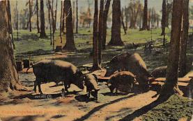 top009933 - Pigs