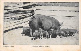 top009961 - Pigs