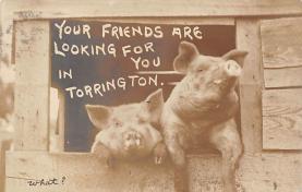 top009963 - Pigs