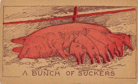 top009967 - Pigs