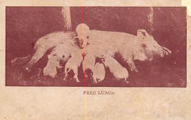 top009997 - Pigs