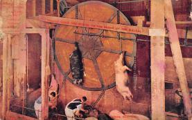 top010003 - Pigs