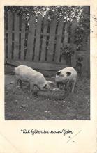 top010015 - Pigs