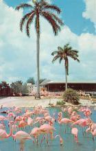 top010027 - Flamingos