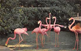 top010029 - Flamingos