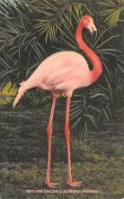 top010043 - Flamingos