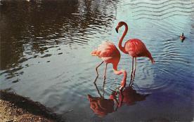top010051 - Flamingos