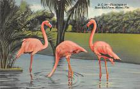 top010059 - Flamingos