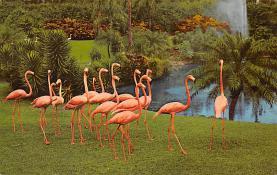 top010069 - Flamingos