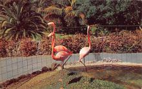 top010071 - Flamingos