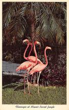 top010083 - Flamingos