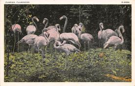 top010091 - Flamingos