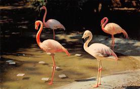 top010095 - Flamingos