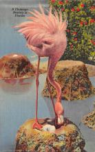 top010101 - Flamingos