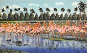 top010129 - Flamingos