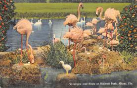 top010133 - Flamingos