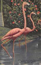 top010135 - Flamingos