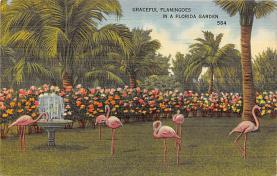 top010139 - Flamingos