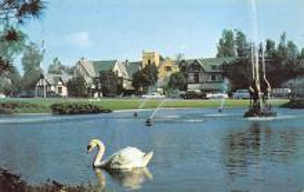 top010159 - Swans