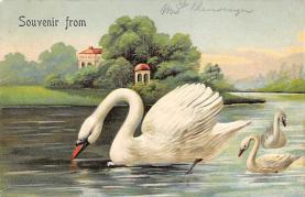 top010173 - Swans