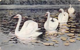 top010175 - Swans