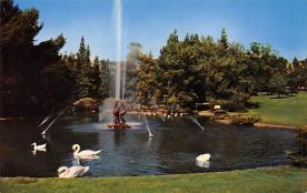 top010177 - Swans